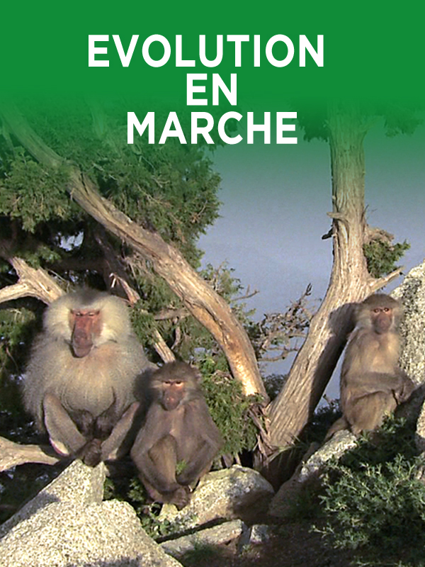 L'Evolution en marche |