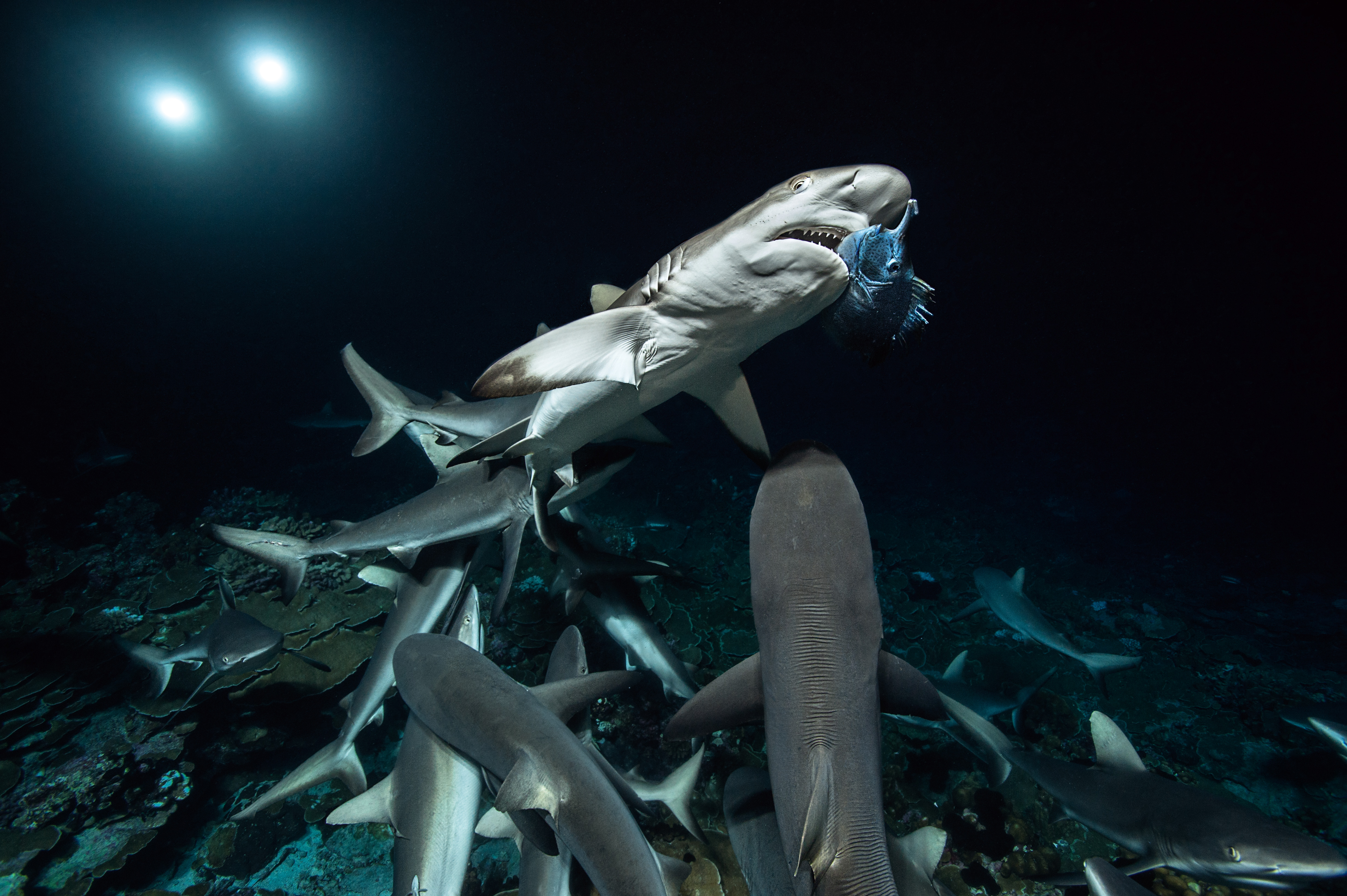 Image illustrating article France inter - Dorothée Barba : 700 requins dans la nuit